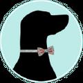 Four Black Paws USA Logo