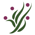 Air Plant Decor Logo