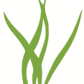 Air Plant Supply Co Logo