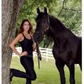 Alympic Equestrian Logo