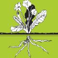 Amaranth Stoneware Logo