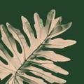 Bloomscape Logo
