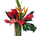 www.bloomsofhawaii.com Logo