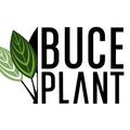 Buce Plant Logo