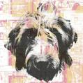 Bull City Records Logo