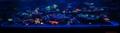 Cali Kid Corals Logo