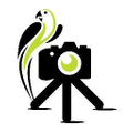 Camera Jungle Logo