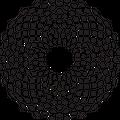 Codex Beauty logo