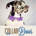 CollarDoos Logo