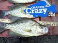Crappie Crazy.com Logo