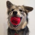 D.Gs Pet Products Logo