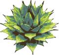 Dig Gardens Logo