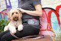 DOOG - Dog Owners Outdoor Gear Logo