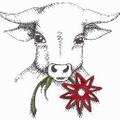 Durham Toffee Logo