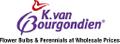 Dutch Bulbs Logo