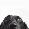 Edition Dog Magazine Logo