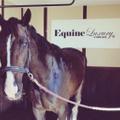 EquineLuxury Logo