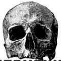 Everything Skull Logo
