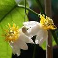 Grassy Knoll Exotic Plants Logo