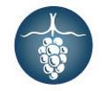Hamptons Wine Shoppe Logo