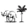 Noémie Logo