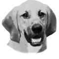 Hipsterhound Logo