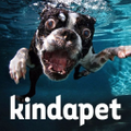kindapet Logo