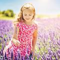 Lavender Pond Farm Logo
