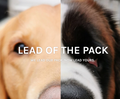 Lead Of The Pack logo