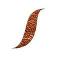 Leather Skin Shop Logo