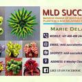 MLD SUCCULENTS logo