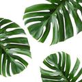 Modern Urban Jungle Logo