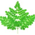 MoringaPowder Logo