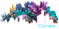 Joel Conklin USA Logo