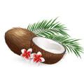 My Coconut Heart USA Logo