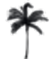NANDI Logo