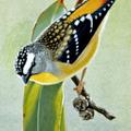 NatureArt Lab Logo