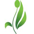 Net Pharmacy Logo