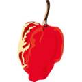 Ntsama's Chilli Oil and Sauces logo