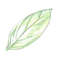 Organico Bello® Logo