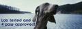 Pawsible Love Logo