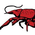 Perlis Logo