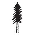 Pn Wonderland Logo