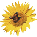 Postcard Mania Logo