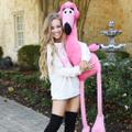 Pretty in Pink Flamingo Boutique Logo