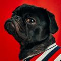 Puppy Wear Co Logo