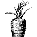 RAWVOLUTION Logo