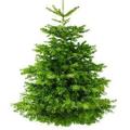Real Christmas Trees Logo