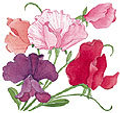 Renee's Garden Logo