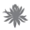 The Sacred Space Miami Logo